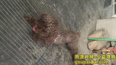 宁波捡到狗,找到了,它是一只非常可爱的宠物狗狗,希望它早日回家,不要变成流浪狗。