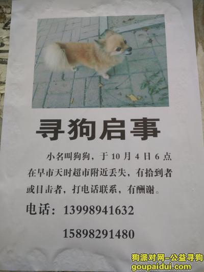 葫芦岛找狗,狗狗快回家,我们都急疯了!!!!,它是一只非常可爱的宠物狗狗,希望它早日回家,不要变成流浪狗。