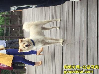 【巢湖找狗】,寻狗启事 酬金1000元 巢湖含山,它是一只非常可爱的宠物狗狗,希望它早日回家,不要变成流浪狗。