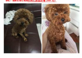 北京密云区寻找爱犬,大家帮忙转发