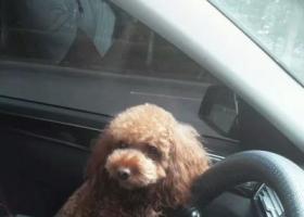 寻狗启示,寻狗启事,酬谢5000元,它是一只非常可爱的宠物狗狗,希望它早日回家,不要变成流浪狗。