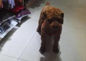 寻狗启示,欢欢沙湾会展中心走失发现者必有重谢,它是一只非常可爱的宠物狗狗,希望它早日回家,不要变成流浪狗。