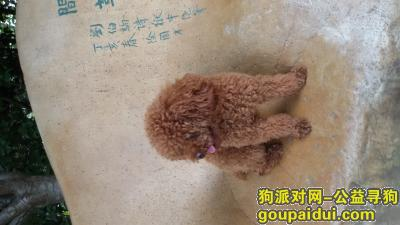 ,平罗的朋友帮帮忙留意下万分感谢。,它是一只非常可爱的宠物狗狗,希望它早日回家,不要变成流浪狗。