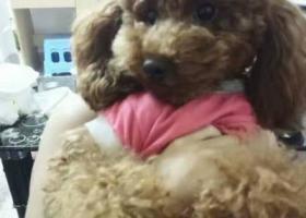 寻狗启示,豆豆别玩了,回家吧,门为你开着!,它是一只非常可爱的宠物狗狗,希望它早日回家,不要变成流浪狗。