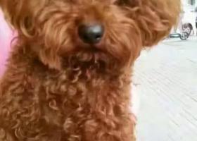 寻狗启示,狗狗丢失,望好心人多帮忙,它是一只非常可爱的宠物狗狗,希望它早日回家,不要变成流浪狗。