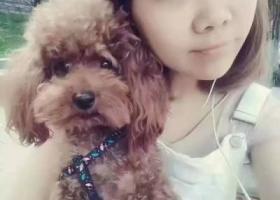 寻狗启示,山东济宁吉安小区寻狗,它是一只非常可爱的宠物狗狗,希望它早日回家,不要变成流浪狗。
