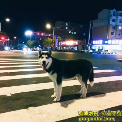 齐齐哈尔找狗,这是图图。哈士奇、性别男,它是一只非常可爱的宠物狗狗,希望它早日回家,不要变成流浪狗。