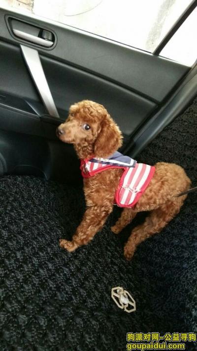 防城港丢狗,大家帮忙找一下这只狗,谢谢了,它是一只非常可爱的宠物狗狗,希望它早日回家,不要变成流浪狗。