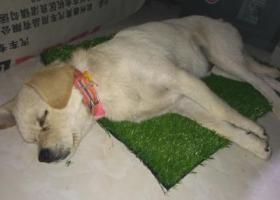 寻狗启示,锡山区东亭锡山公安局附近捡到一只狗寻主人,它是一只非常可爱的宠物狗狗,希望它早日回家,不要变成流浪狗。