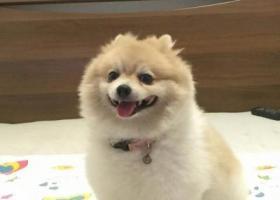 东莞市南城区丢失爱犬,希望好心人帮忙找回