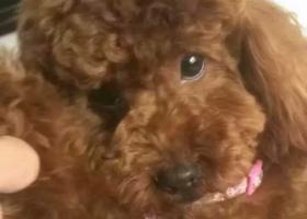 寻狗启示!!!帮寻狗启示!!!2016年10月24日,早六点三十分,在南岗区龙福家园!!!在7栋1单元丢失一个泰迪狗,如果有看到的联系我,13945171731谢谢各位,在龙福家园。