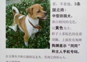 无锡东亭柏庄路附近酬谢2000元寻找狗狗