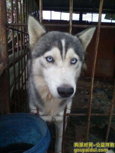 ,请各位好心人帮忙找狗,它是一只非常可爱的宠物狗狗,希望它早日回家,不要变成流浪狗。
