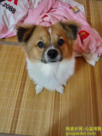 ,找寻狗希望好心人帮忙,它是一只非常可爱的宠物狗狗,希望它早日回家,不要变成流浪狗。