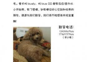 寻狗启示,寻狗,在广东省佛山市顺德区番禺大岗潭村新围村4队,它是一只非常可爱的宠物狗狗,希望它早日回家,不要变成流浪狗。