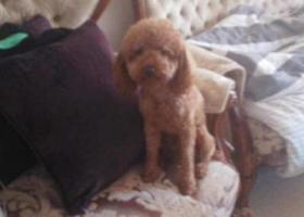 寻狗启示,10.18日晚于呼和浩特武川县丢失,它是一只非常可爱的宠物狗狗,希望它早日回家,不要变成流浪狗。