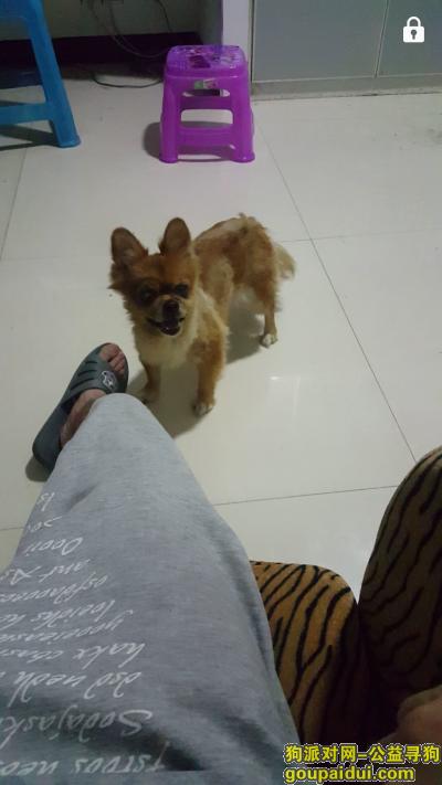 娄底找狗,寻狗狗,中年小博美,在娄底涟源龙塘乡丢失,它是一只非常可爱的宠物狗狗,希望它早日回家,不要变成流浪狗。