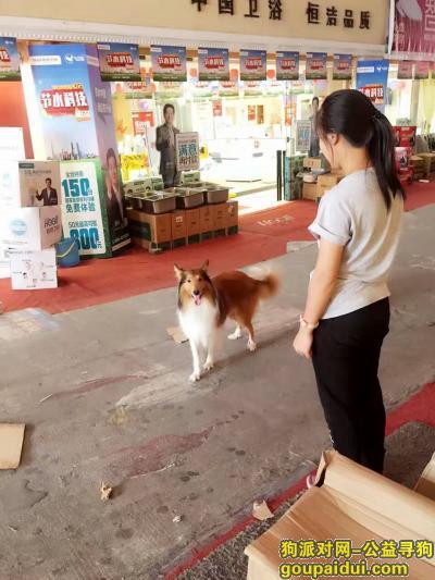 黔东南寻狗启示,麦克 你在哪 我很着急,它是一只非常可爱的宠物狗狗,希望它早日回家,不要变成流浪狗。