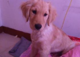 寻狗启示,寻爱犬,可乐,希望狗宝早日回家,它是一只非常可爱的宠物狗狗,希望它早日回家,不要变成流浪狗。