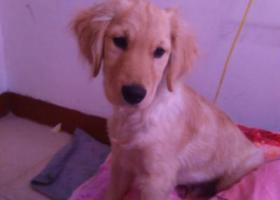 寻狗启示,麻麻我想回家,我很想你,它是一只非常可爱的宠物狗狗,希望它早日回家,不要变成流浪狗。