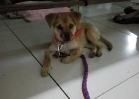 寻狗启示,江阴市,祝塘镇,北前头,它是一只非常可爱的宠物狗狗,希望它早日回家,不要变成流浪狗。