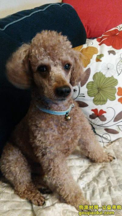 【成都找狗】,寻狗!重金酬谢!11月12日在青羊区清波路金沙愉景一期后门走失,它是一只非常可爱的宠物狗狗,希望它早日回家,不要变成流浪狗。