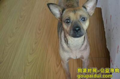 咸宁寻狗网,湖北省赤壁市金三角,我的麻花走丢了,它是一只非常可爱的宠物狗狗,希望它早日回家,不要变成流浪狗。