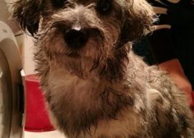 寻狗启示,在九鼎花园走失的小花狗,主人快来认领,它是一只非常可爱的宠物狗狗,希望它早日回家,不要变成流浪狗。