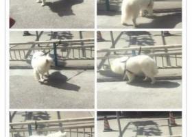 寻狗启示,王江泾喇叭口新永联路,它是一只非常可爱的宠物狗狗,希望它早日回家,不要变成流浪狗。