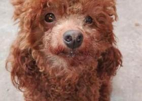 寻狗启示,拉丽走丢了,请好心人看到的打电话给我,我将以1000元作为报酬,它是一只非常可爱的宠物狗狗,希望它早日回家,不要变成流浪狗。