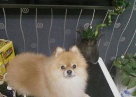 寻狗启示,寻找爱犬七仔,重金酬谢,它是一只非常可爱的宠物狗狗,希望它早日回家,不要变成流浪狗。