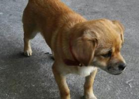 寻狗启示,重金寻爱犬,联系电话:13915248446,它是一只非常可爱的宠物狗狗,希望它早日回家,不要变成流浪狗。