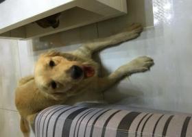 寻狗启示,谁家的狗狗快来认领在不认领我就送人啦,后果概不负责。,它是一只非常可爱的宠物狗狗,希望它早日回家,不要变成流浪狗。