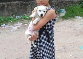 寻狗启示,12月5日不见的小狗,它是一只非常可爱的宠物狗狗,希望它早日回家,不要变成流浪狗。