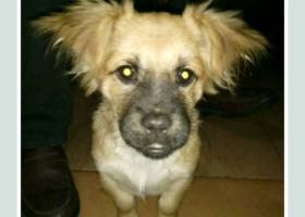 本家小狗于11月10日走失