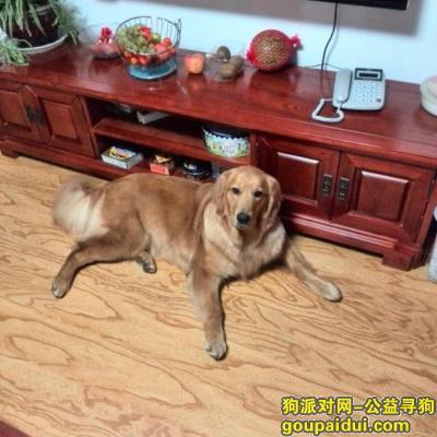 池州寻狗网,寻狗启示 格格快回家 妈妈姐姐想你了,它是一只非常可爱的宠物狗狗,希望它早日回家,不要变成流浪狗。