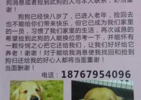 寻狗启示,义乌北苑-寻金毛-2016年11月26日丢失,它是一只非常可爱的宠物狗狗,希望它早日回家,不要变成流浪狗。