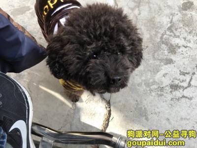盐城寻狗主人,大丰中医院捡到黑色泰迪一只,身穿衣服,它是一只非常可爱的宠物狗狗,希望它早日回家,不要变成流浪狗。