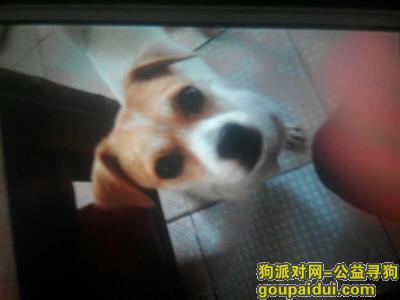 ,韶关武江区哈巴狗丢失,它是一只非常可爱的宠物狗狗,希望它早日回家,不要变成流浪狗。