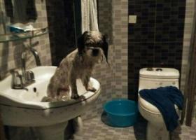 寻狗启示,2016年12月14日早上7点半海淀区花园路金尚家园边走丢,它是一只非常可爱的宠物狗狗,希望它早日回家,不要变成流浪狗。
