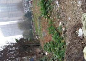 成都市成华区多宝寺附近看到的狗狗
