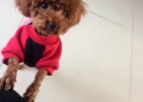 寻狗启示,寻狗启示  寻找小五,它是一只非常可爱的宠物狗狗,希望它早日回家,不要变成流浪狗。