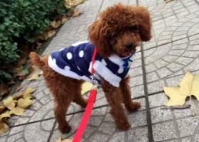 寻狗启示,寻狗启示寻找小五 小五快回家,它是一只非常可爱的宠物狗狗,希望它早日回家,不要变成流浪狗。