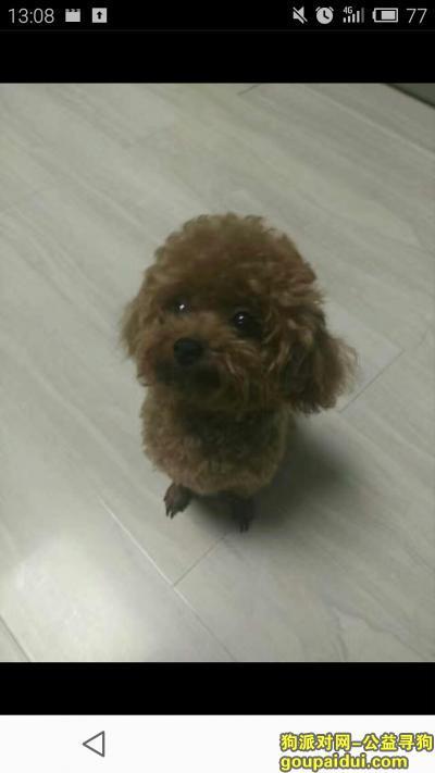 盘锦寻狗启示,大家帮忙 找找我家宝贝 谢谢大家了,它是一只非常可爱的宠物狗狗,希望它早日回家,不要变成流浪狗。