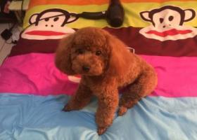 寻狗启示,请大家帮助我 找到我家果果,它是一只非常可爱的宠物狗狗,希望它早日回家,不要变成流浪狗。