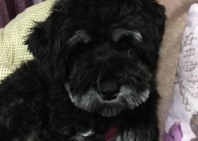 寻狗启示,寻爱狗,好心人帮忙留意,必将重谢,它是一只非常可爱的宠物狗狗,希望它早日回家,不要变成流浪狗。
