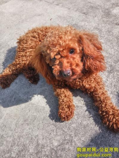 ,我家狗狗丢了,望好心人看到了能够联系我,谢谢你们,它是一只非常可爱的宠物狗狗,希望它早日回家,不要变成流浪狗。