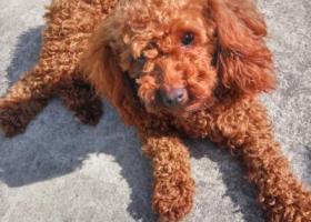 寻狗启示,我家狗狗丢了,望好心人看到了能够联系我,谢谢你们,它是一只非常可爱的宠物狗狗,希望它早日回家,不要变成流浪狗。