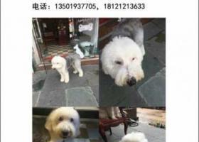 上海黄浦区陆家浜路酬谢五千元寻找古代牧羊犬