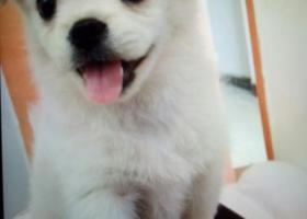 寻狗启示,在芜湖弋江区月河星城丢失的小狗,为田园犬,它是一只非常可爱的宠物狗狗,希望它早日回家,不要变成流浪狗。